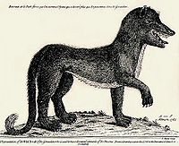 200px-Gevaudanwolf