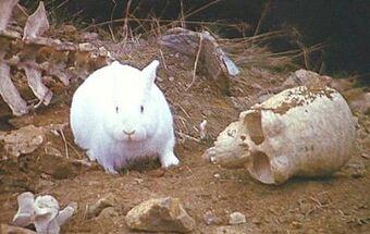 Rabbit of Caerbannog | Monty Python Wiki | Fandom