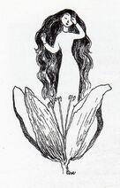 Tulippa