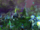 Post-Cataclysm War for Ashenvale