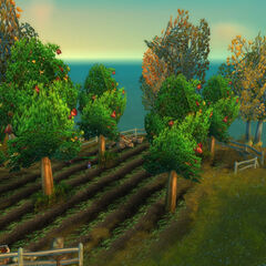 An apple orchard in <a href=