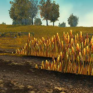 Wheat being grown on the plains of <a href=