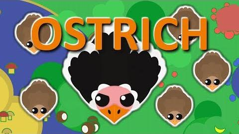MOPE.IO OSTRICH THE BIGGEST BIRD COMES TO MOPE MopeContent TEASER 21