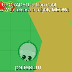 A freshly spawned white lion cub.