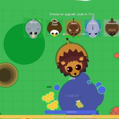 A huge Black-Maned Lion, about to upgrade.