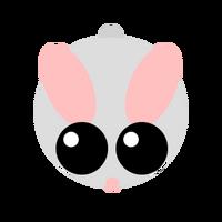 Arctichare