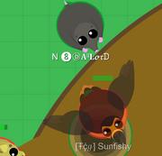 SunfishyComfirmed