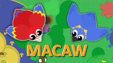 MOPE.IO *NEW* Macaw COMES TO MOPE *NEW* ABILITY TEASER 56