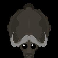 Muskox