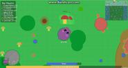 Hippo eating 2 Mushroom Bushes