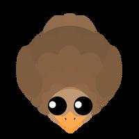 Ostrich-Baby
