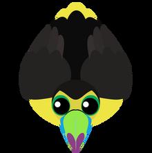Toucan (4)