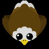 Eaglenew