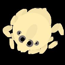 Spider Carcc