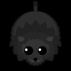 Black Lion