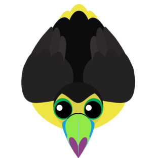 Old Keel-Billed Toucan