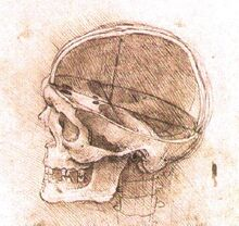 View-of-a-skull