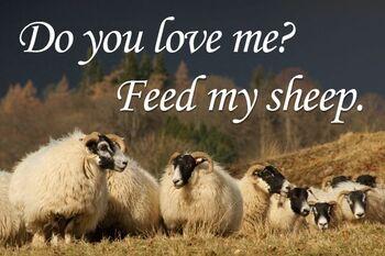 Do-you-love-me-feed-my-sheep