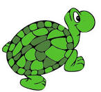 File:Sara turtle.png