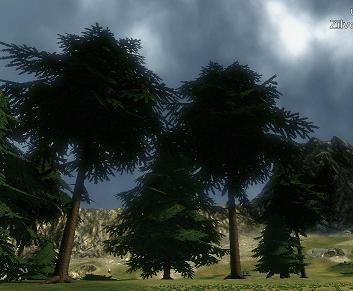 Firmwood Tree