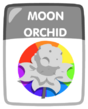 Moon Orchid 1