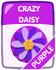 Purple Crazy Daisy