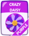 Purple Crazy Daisy