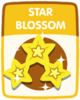 Star Blossom old