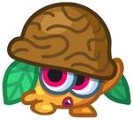 Nutmeg6