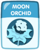 Moon orchid