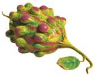 Grapermelon