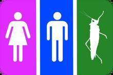 Grasshoppergender toilets sing