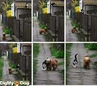 http://www.digmydog.org/true-friends-friends-dogs-3071