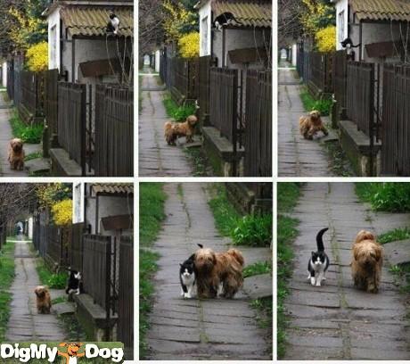 File:-dogs-1333809215.jpg