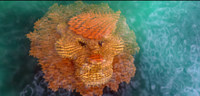 Fishy Lion