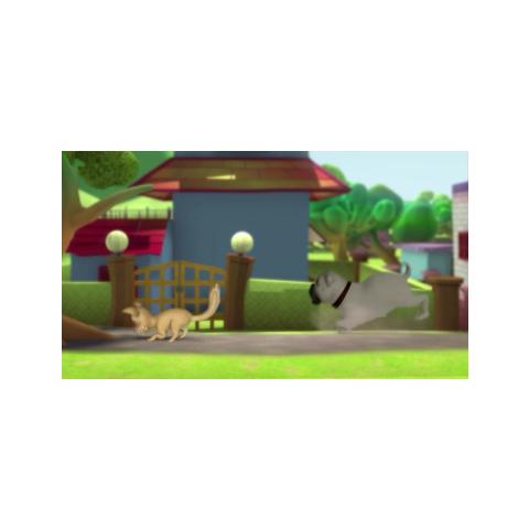 Buzo chasing a cat