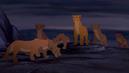 The Lioness Pride