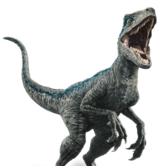 Blue, The Velociraptor