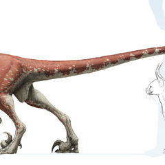 Deinonychus (Female)