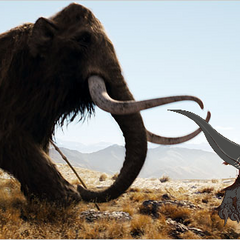 Kilo Vs Woolly Mammoth