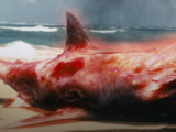 Atomic Sharks