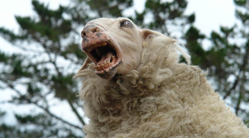 Zombie Sheep | Movie Monster Wiki | Fandom