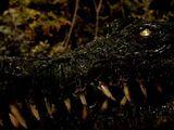 Zombie Croc