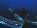 Alien Eels