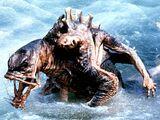 Homo aquaticus