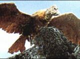 Ookondoru