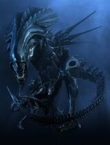 180px-Queen AlienPress still01