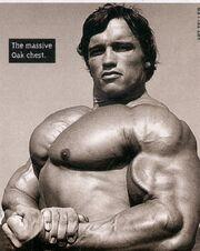 Arnold-schwarzenegger-oak-chest-muscles