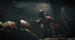 Ant-Man Ameisen