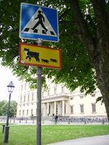 Uppsala - przejscie dla kotow